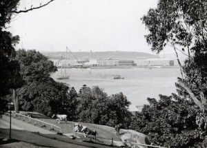 View of Garden Island from the Domain, c.1890s [RAHS Photograph Collection]